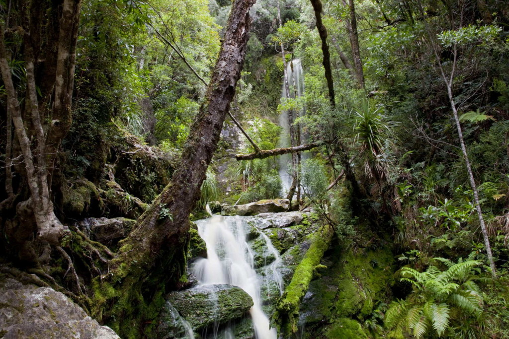 Remote wilderness at 'pig trough waterfall' with temperate rainforest